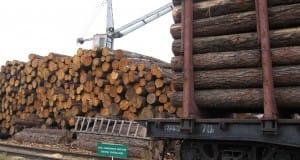 торговля лесом