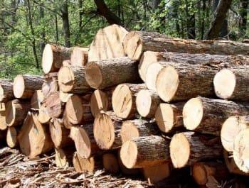 чиновники воровали лес